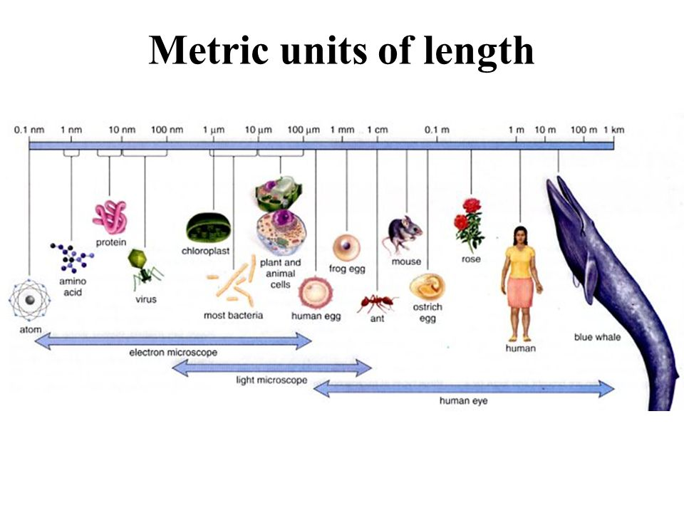 microscopy and the metric system essay Free essay: the metric system unlike present day, where most scientific groups  and people use the standard unit of measurement the metric system, there.