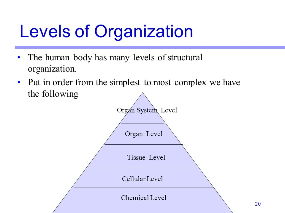 the structure and organization of the human body When cells of similar structure and function join together they levels of organization in the human body levels of organization (01.