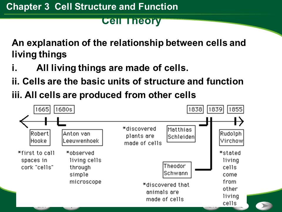 relationship between structure and function of hemoglobin is
