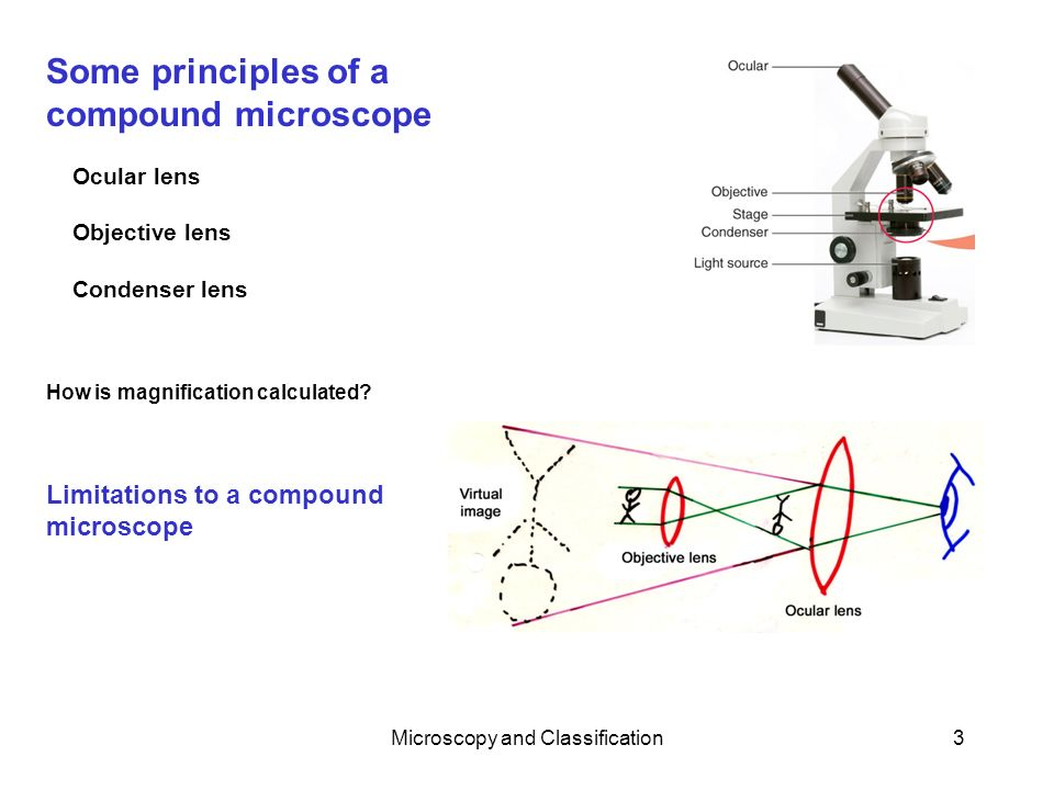 Microscopy and classification ppt video online download microscopy and classification ccuart Images