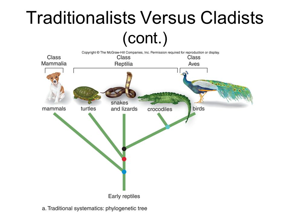 essentials of biology sylvia mader pdf