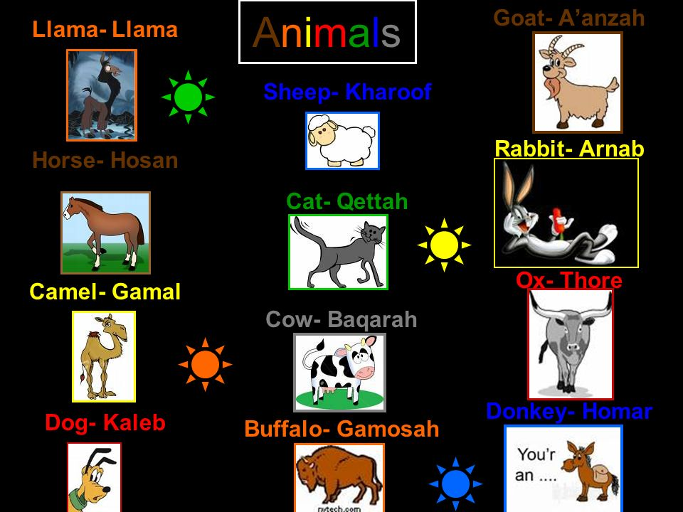 Animals Goat- A'anzah Rabbit- Arnab Ox- Thore Donkey- Homar