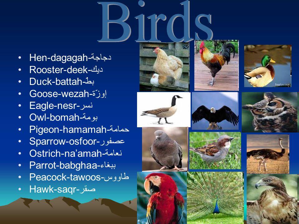 Birds Hen-dagagah-دجاجة Rooster-deek-ديك Duck-battah-بطّ