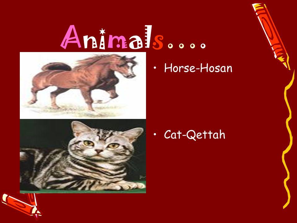 Animals…. Horse-Hosan Cat-Qettah