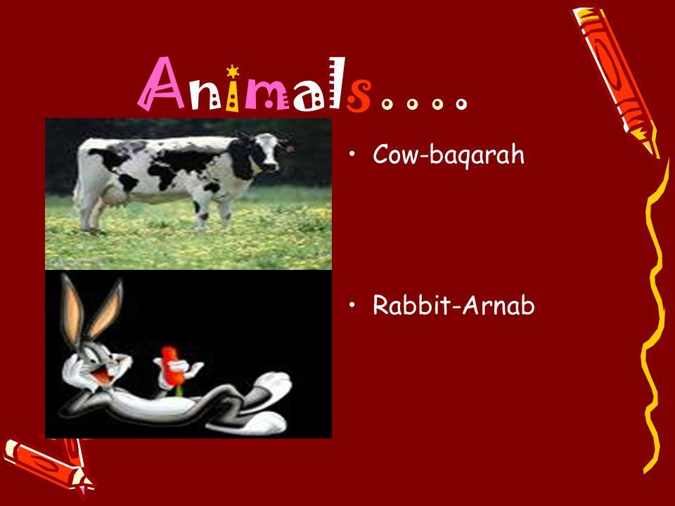 Animals…. Cow-baqarah Rabbit-Arnab