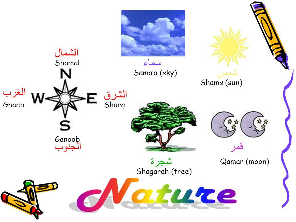 Nature الشمال سماء شمس الغرب الشرق الجنوب قمر شجرة Shamal Sama'a (sky)