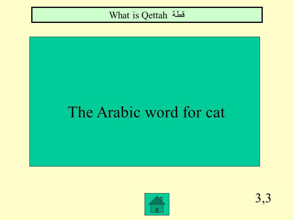 What is Qettahقطة The Arabic word for cat 3,3