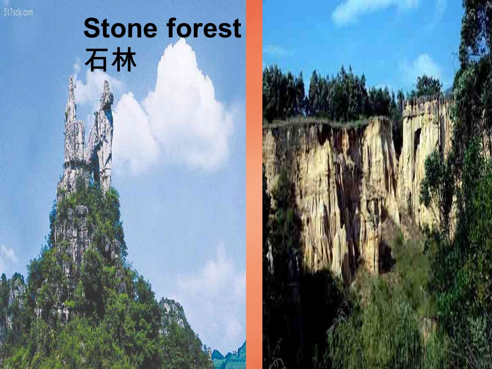 Stone forest 石林