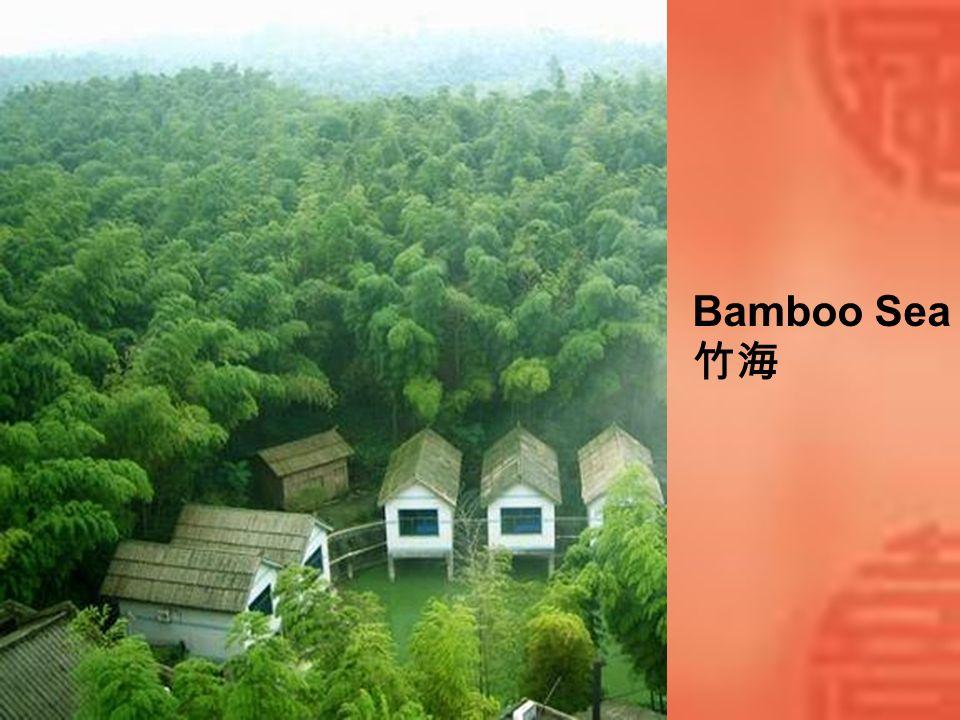 Bamboo Sea 竹海