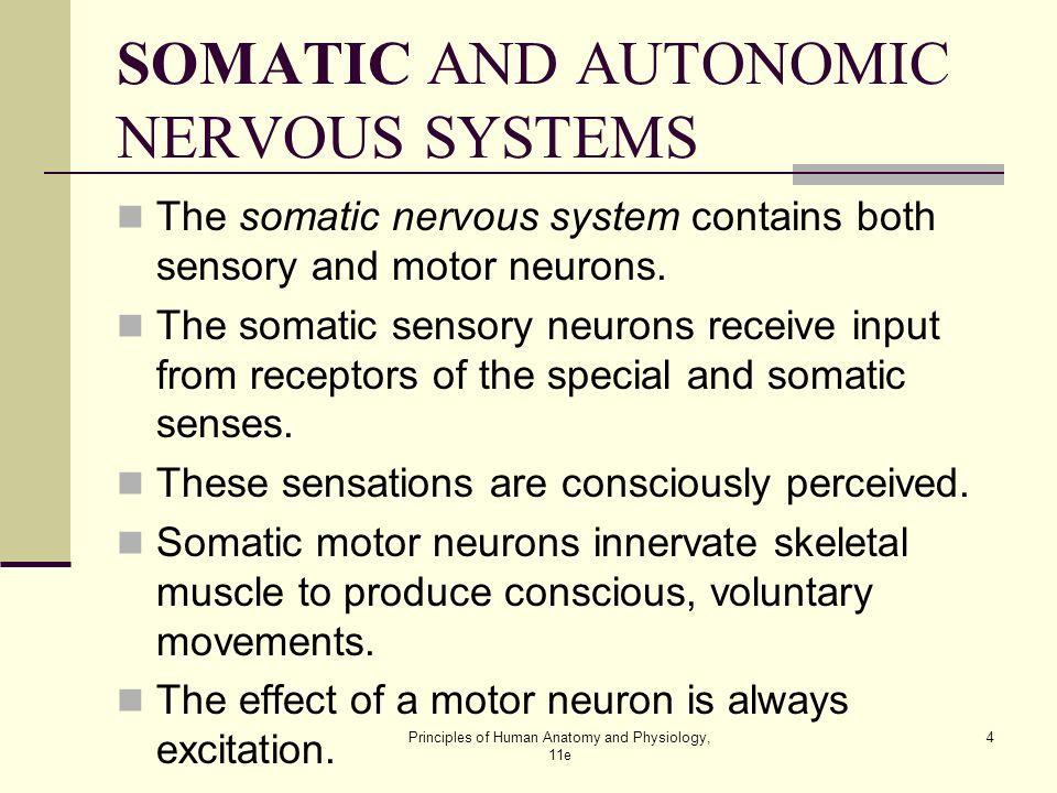 autonomic and somatic nervous system pdf