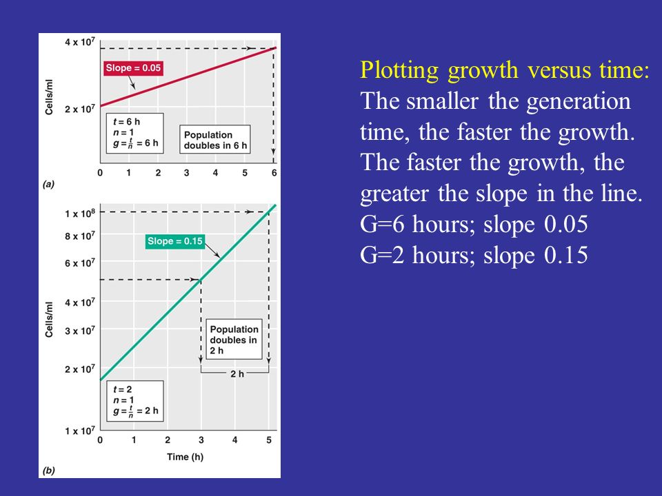 Plotting growth versus time:
