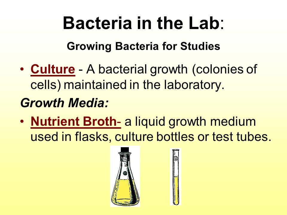 bacterial growth lab 2012-5-29 environmental conditions & bacteria growth  bacterial growth  ð•during the next lab period you will determine the effect of salt on the growth.