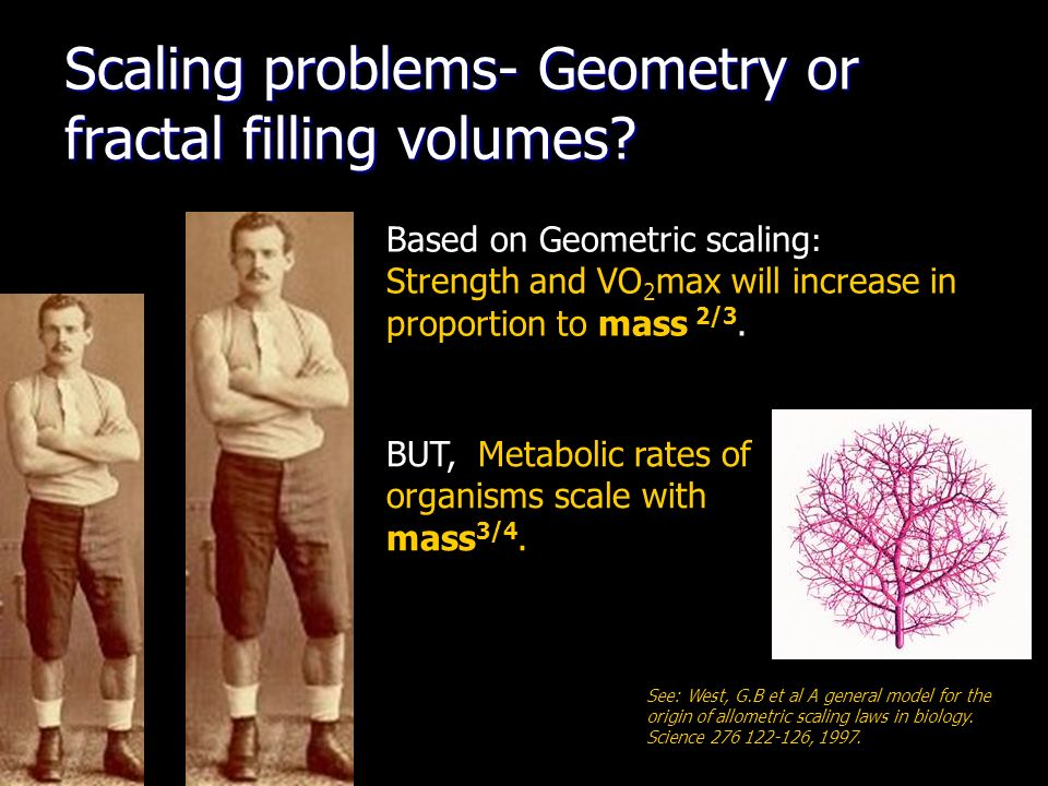 Scaling problems- Geometry or fractal filling volumes