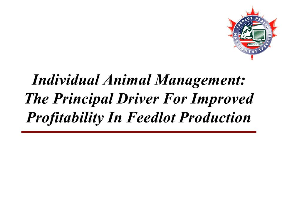 2 individual animal management the principal driver for improved profitability in feedlot production - Production Consultant