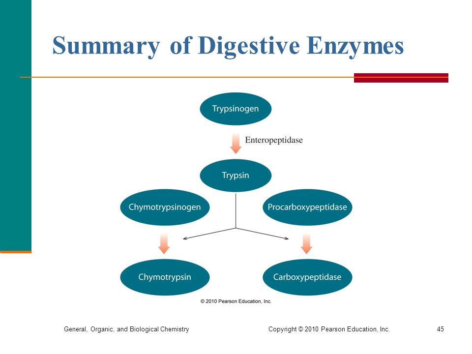 an overview of enzymes Enzymes function and structure enzymes are very efficient catalysts for biochemical reactions they speed up reactions by providing an alternative reaction pathway of lower activation.