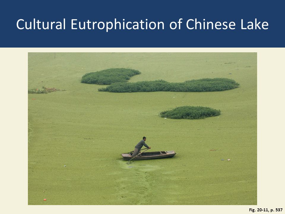 cultural pollution Read chapter 4 environmental impacts of renewable electricity generation: the united states and china are the world's top two energy consumers and, as of.