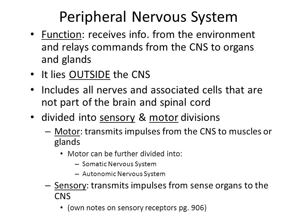 The Nervous System Chapter ppt video online download | 960 x 720 jpeg 92kB