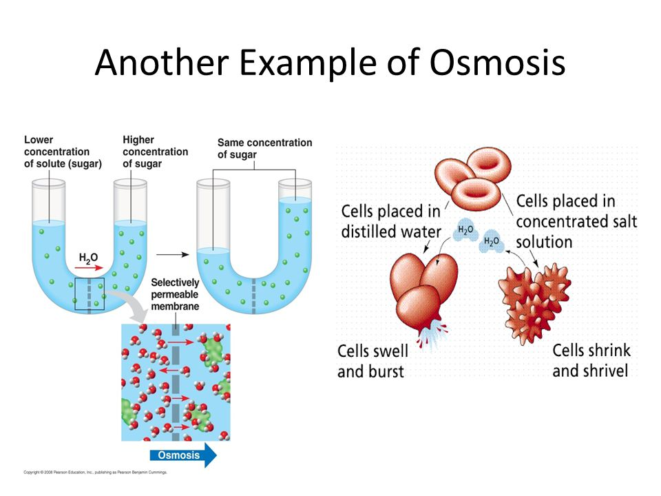 life example of osmosis If you want to understand osmosis you need to understand first diffusion since osmosis is a type of diffusion diffusion is the movement of molecules from high concentration place to a low one through a semipermeable membrane .