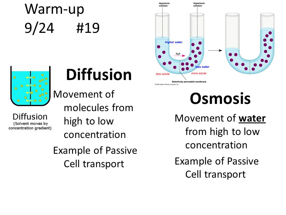 the movement of molecules from higher to lower concentration Osmosis is defined as 'the movement of water molecules from an area of high water concentration to an area of when the solute concentration is lower than.