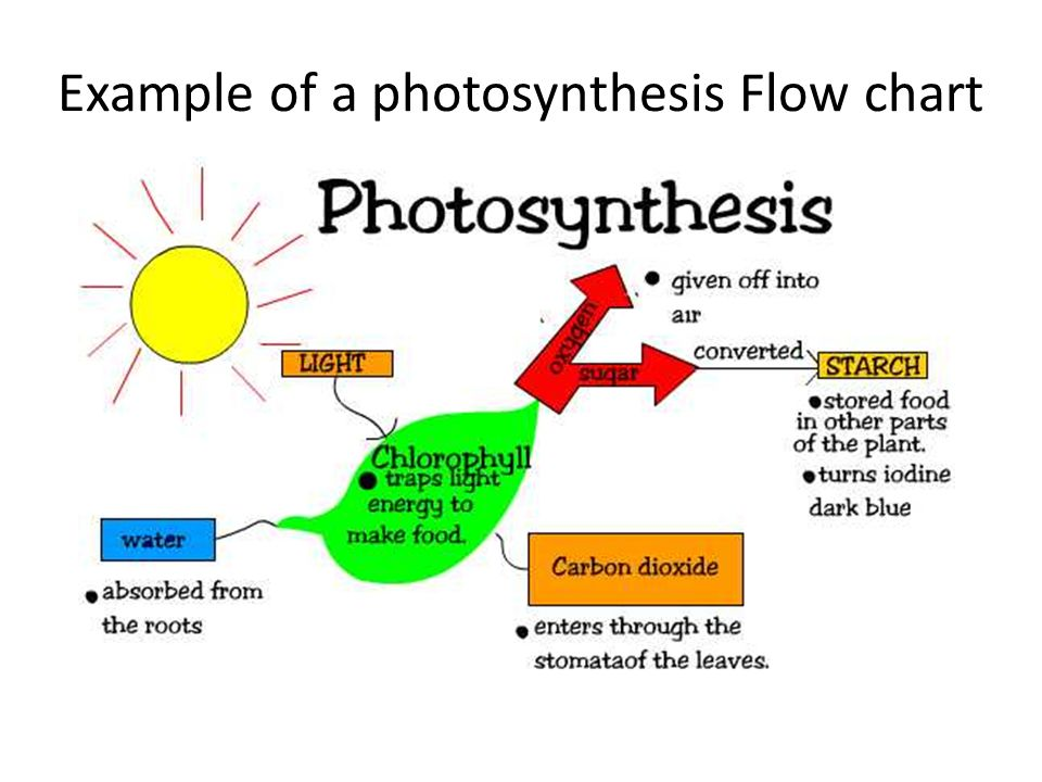 Energy Flow In Photosynthesis And Cellular Respiration Energy Etfs