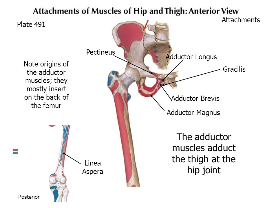 The Hip Impingement Solution  Juggernaut