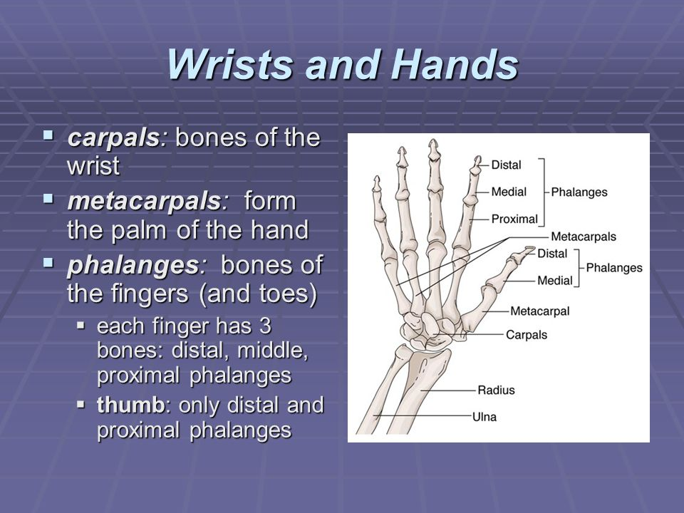 Med Term book chapter 4, pages 94 – 113. Exercises: 1 – ppt video ...