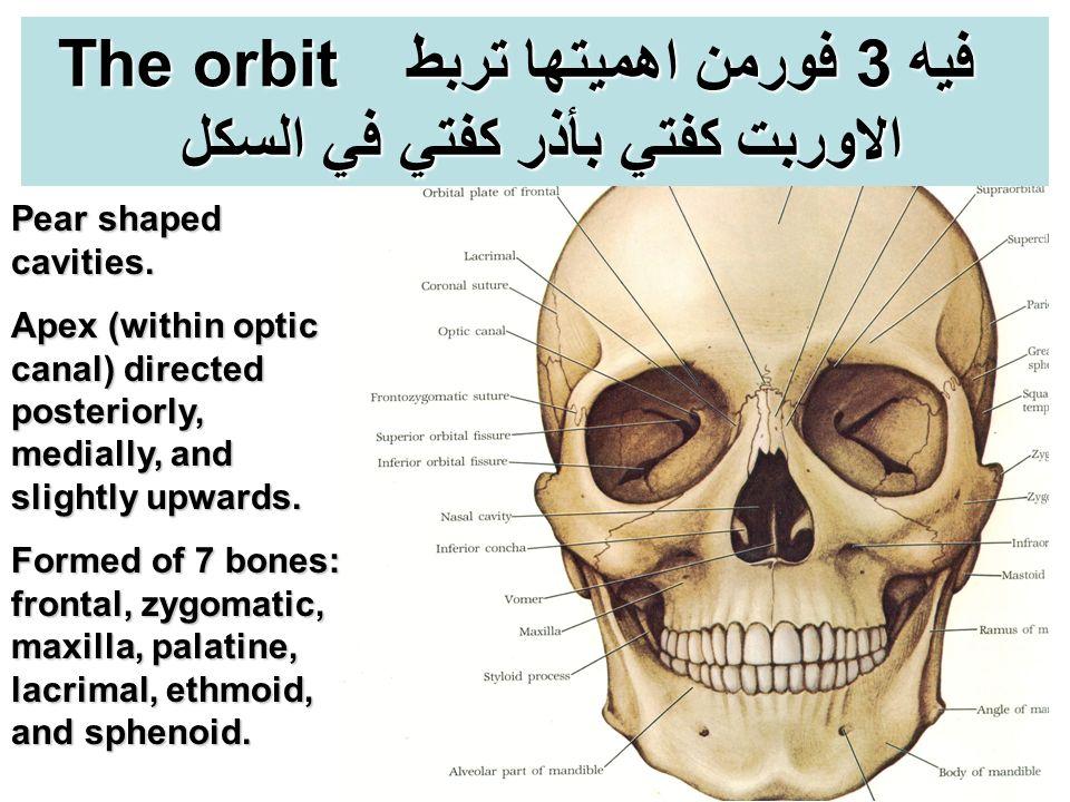 Charmant Orbital Anatomie Definition Ideen - Menschliche Anatomie ...