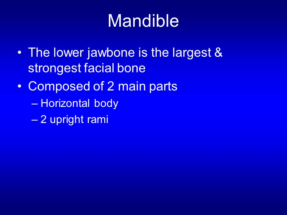 What is the largest facial bone