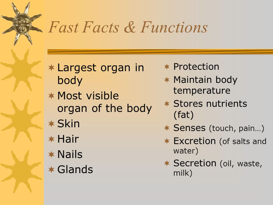 Fast Facts & Functions Largest organ in body