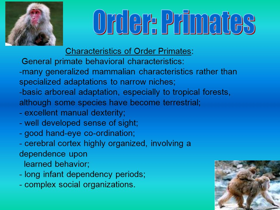 Primate taxonomy study