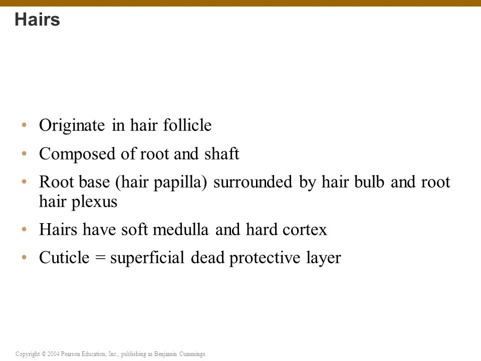 Hairs Originate in hair follicle Composed of root and shaft