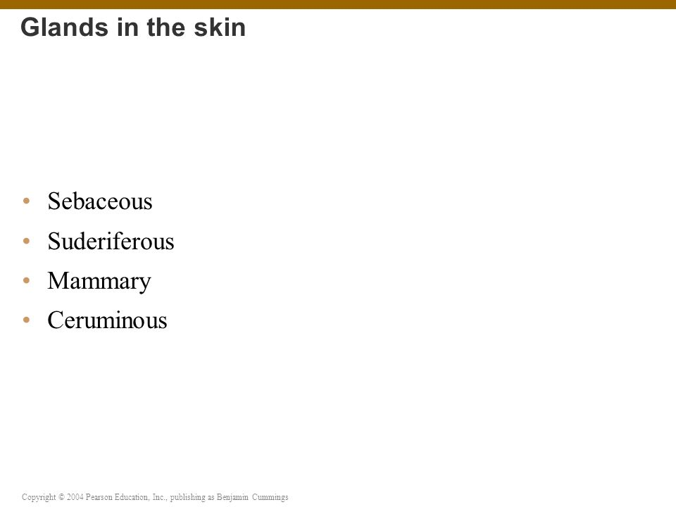 Glands in the skin Sebaceous Suderiferous Mammary Ceruminous