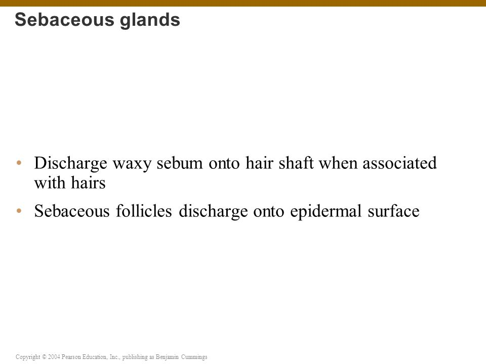 Sebaceous glands Discharge waxy sebum onto hair shaft when associated with hairs.