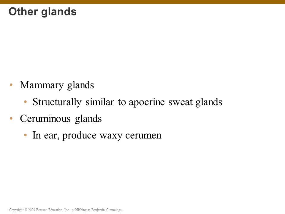 Other glands Mammary glands