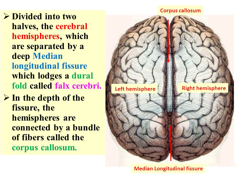 Brain Topography. - ppt video online download