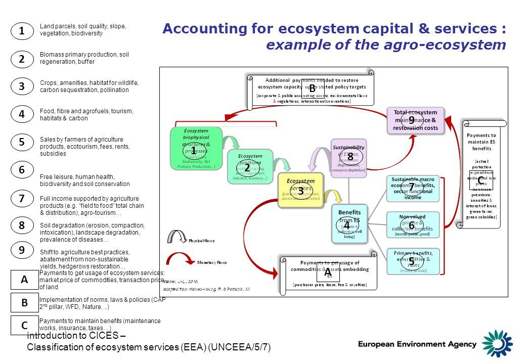 Accounting for ecosystem capital & services : example of the agro-ecosystem