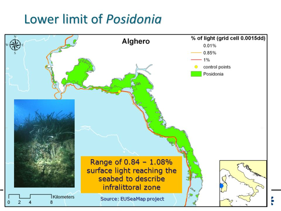 Lower limit of Posidonia