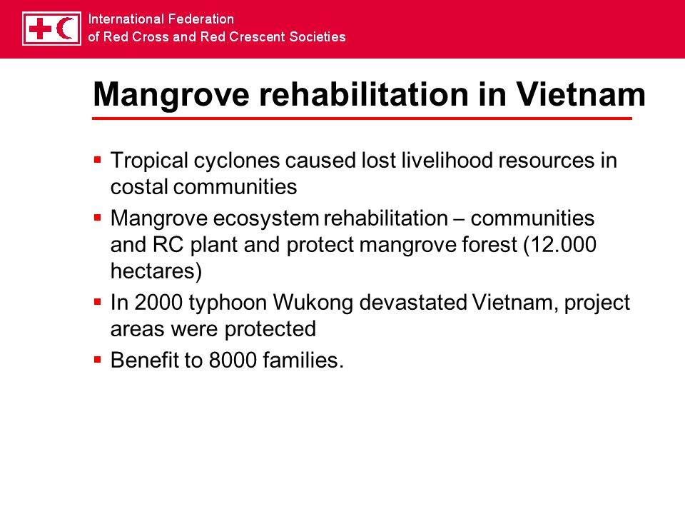 Mangrove rehabilitation in Vietnam
