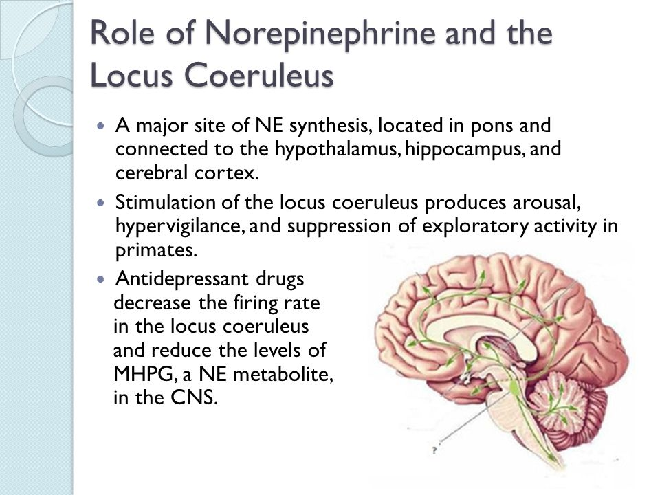 What Is Norepinephrine foto
