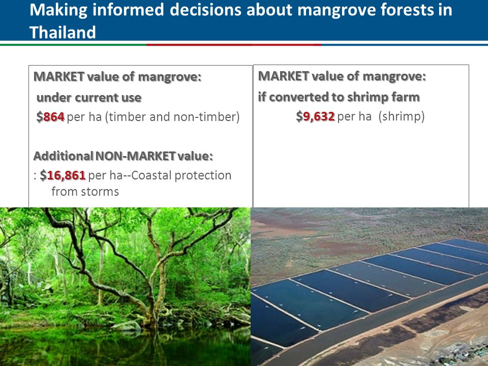Making informed decisions about mangrove forests in Thailand