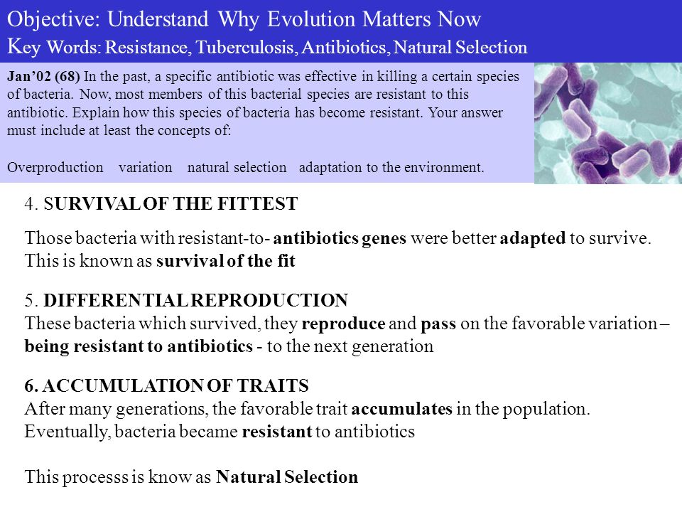 Explain Antibiotic Resistance In Terms Of Natural Selection