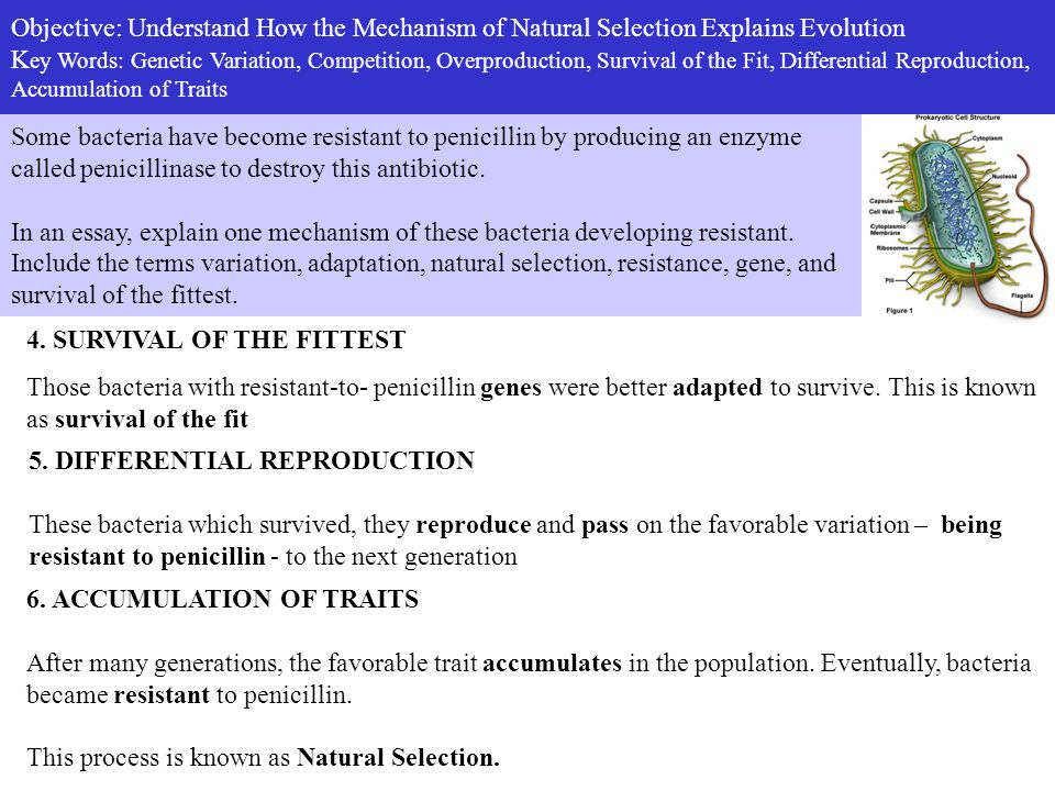 how does natural selection really work ppt video online  objective understand how the mechanism of natural selection explains evolution key words genetic variation