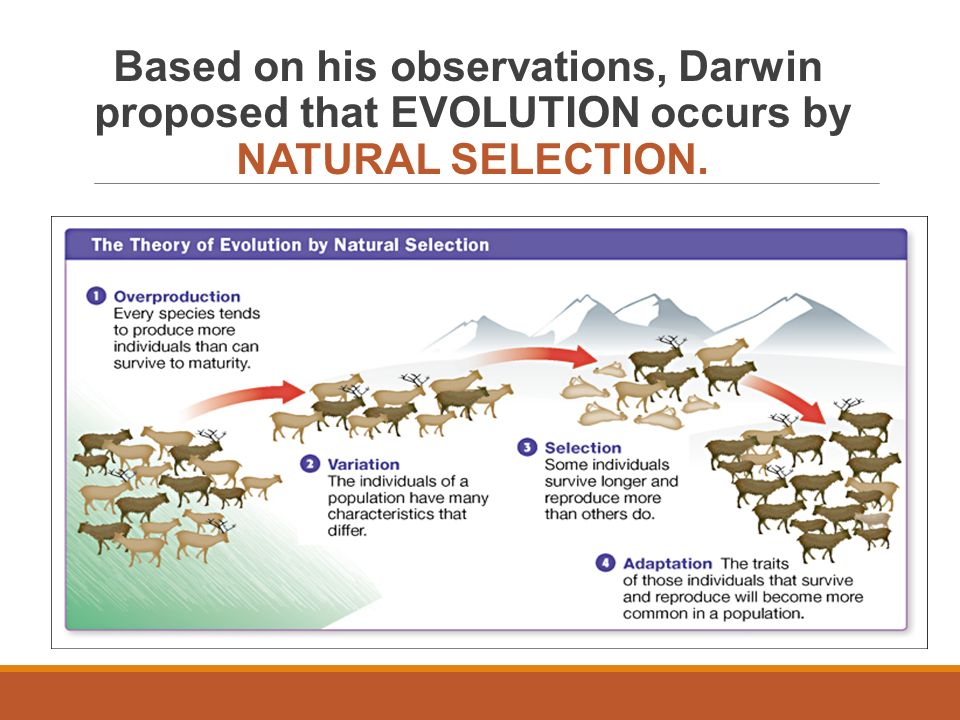Natural Selection And Sexula Selection