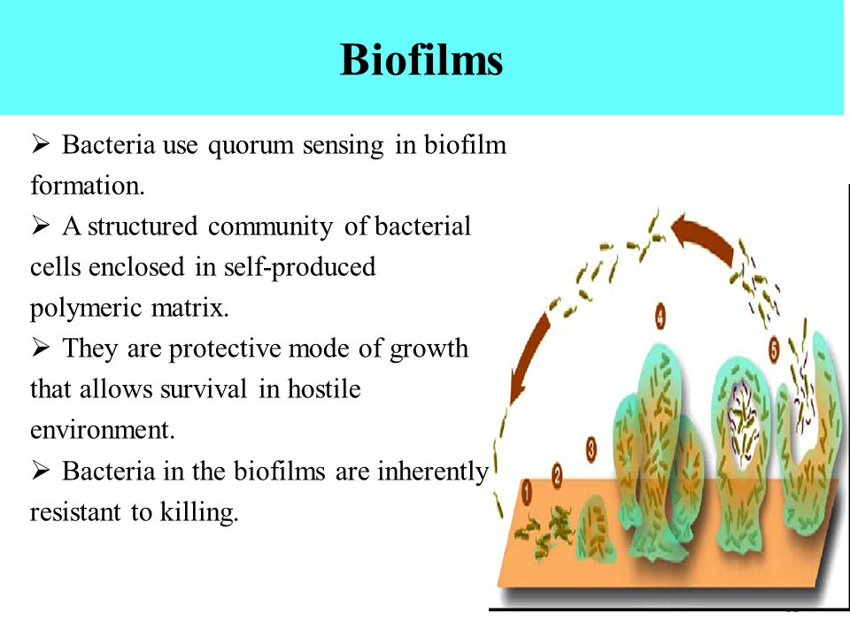 bacterial biofilms formation and quorum sensing biology essay There is evidence that decreased diffusion into the biofilm (8, 43), decreased bacterial growth rate in a biofilm , biofilm-specific substances such as exopolysaccharide , and the quorum-sensing specific effects (7, 17) may be reasons for this resistance this property of biofilms, thus, is most likely multifactorial.