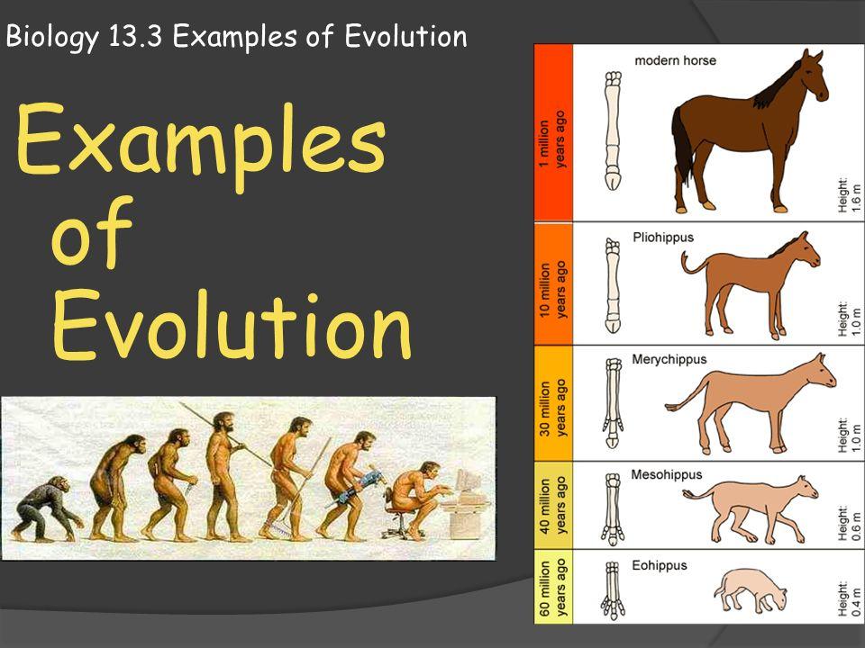 evolution and microbiology Define evolution (biology) evolution (biology) synonyms, evolution (biology) pronunciation, evolution (biology) translation, english dictionary definition of evolution (biology.