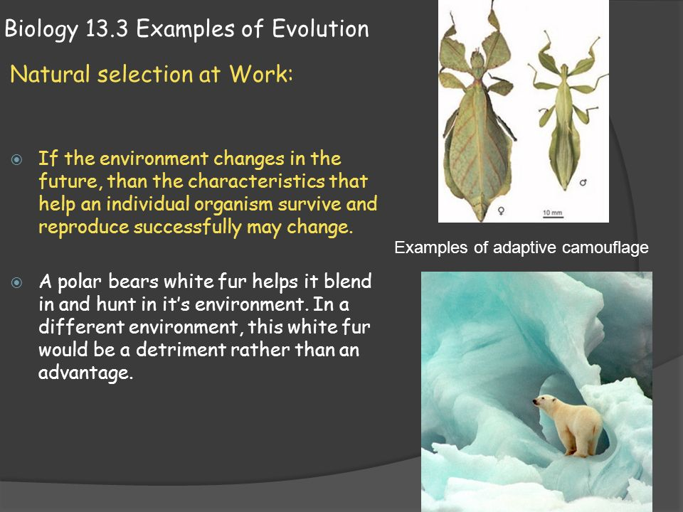 examples of natural selection biology Natural selection is the gradual process by which biological traits become either more or less common in a population as a function of the effect of inherited traits on the differential reproductive success of organisms interacting with their environment.