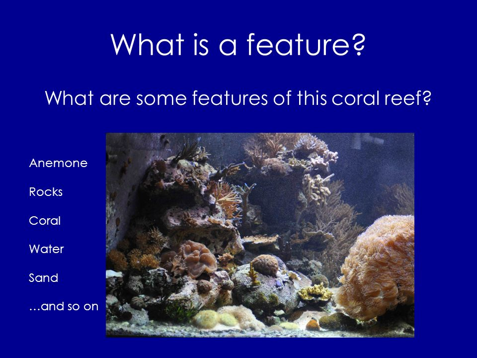 What are some features of this coral reef