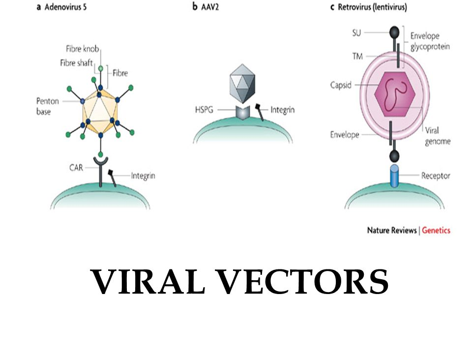 download from vectors to tensors