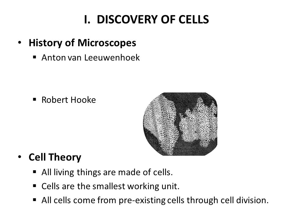 microscopes and cell theory Cell theory - cell theory was made possible by the invention of the microscope learn more about the evolution of and the people involved in cell theory.