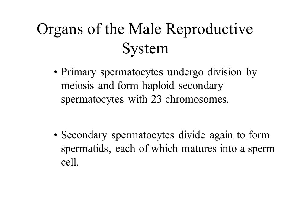 Reproductive System Chapter 19 Bio ppt download
